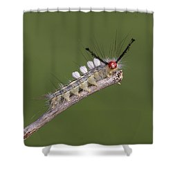 White-marked Tussock Moth Shower Curtain by David Lester