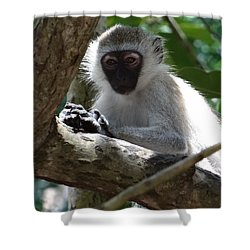 White Monkey In A Tree 4 Shower Curtain