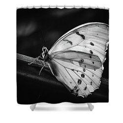 White Morpho Black And White Shower Curtain