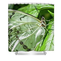 White Morpho Butterfly Shower Curtain
