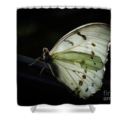 White Morpho In The Moonlight Shower Curtain