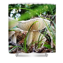 White Mushrooms Shower Curtain