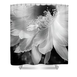 White Night Blooming Cactus Shower Curtain