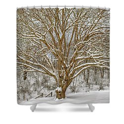 White Oak In Snow Shower Curtain