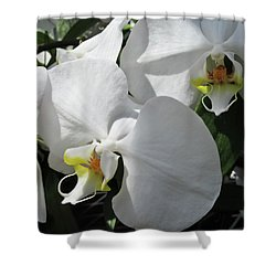 White Orchid Bloom Duo Shower Curtain