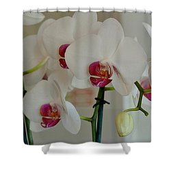 White Orchid Mothers Day Shower Curtain by Marsha Heiken