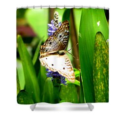 White Peacock Butterfly Painting  Shower Curtain