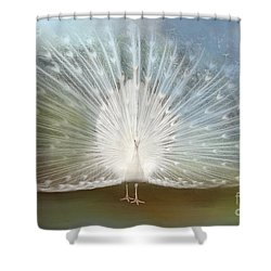 White Peacock In All His Glory Shower Curtain