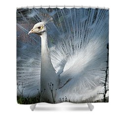 White Peacock Shower Curtain by Lamarre Labadie