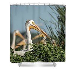 Shower Curtain featuring the photograph White Pelican 7-2015 by Thomas Young