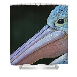 White Pelican Close Up Shower Curtain by Avalon Fine Art Photography