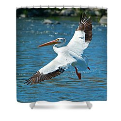 White Pelican Flight Shower Curtain by Mike Dawson