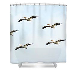 White Pelican Flyby Shower Curtain by Ricky L Jones