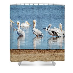 White Pelicans Shower Curtain