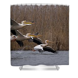 White Pelicans In Flight Over Lake Shower Curtain
