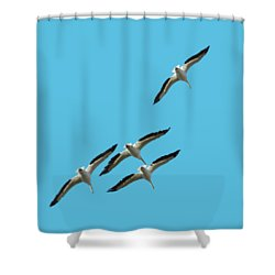White Pelicans Transparency Shower Curtain