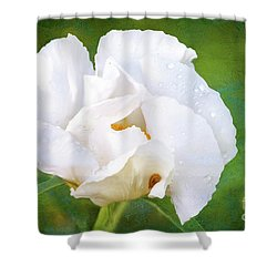 White Peony After The Rain Shower Curtain