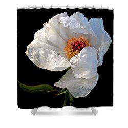 White Peony After The Rain Shower Curtain by Gill Billington
