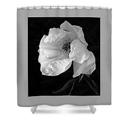 White Peony After The Rain In Black And White Shower Curtain by Gill Billington