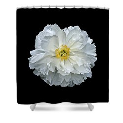 White Peony Shower Curtain by Charles Harden