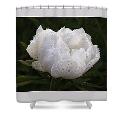 White Peony Covered In Raindrops Shower Curtain by Gill Billington