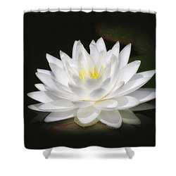 White Petals Glow - Water Lily Shower Curtain by MTBobbins Photography