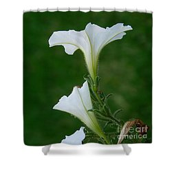 White Petunia Blossoms Shower Curtain