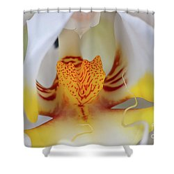 White Phalaenopsis Orchid 2 Shower Curtain