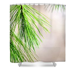 Shower Curtain featuring the photograph White Pine Branch by Christina Rollo