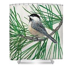 White Pine Chickadee Shower Curtain