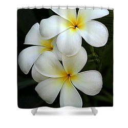 White Plumeria Shower Curtain
