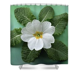 White Primrose Shower Curtain by Terence Davis