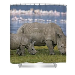 White Rhino Mother And Calf Grazing Shower Curtain by Ingo Arndt