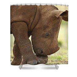 White Rhinoceros Ceratotherium Simum Shower Curtain by Matthias Breiter