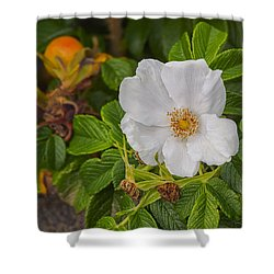 White Rosa Rugosa Beach Rose Shower Curtain