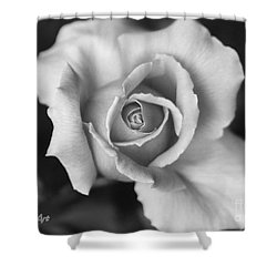 White Rose Against Black Shower Curtain