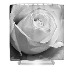 White Rose Shower Curtain by Brian Roscorla