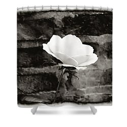 White Rose In Black And White Shower Curtain by Bill Cannon
