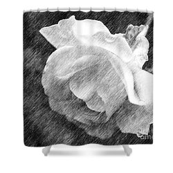 White Rose In Pencil Shower Curtain