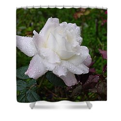 White Rose In Rain Shower Curtain