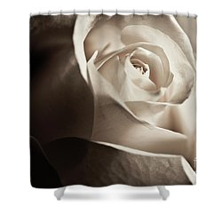 Shower Curtain featuring the photograph White Rose In Sepia 2 by Micah May