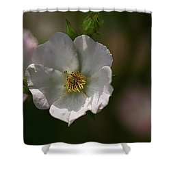 White Rose In Shadow Shower Curtain
