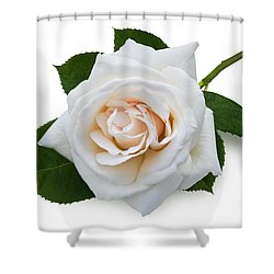 White Rose Shower Curtain by Jane McIlroy