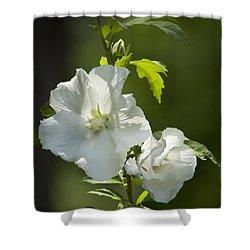White Rose Of Sharon Squared Shower Curtain by Teresa Mucha