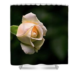 White Rosebud Shower Curtain