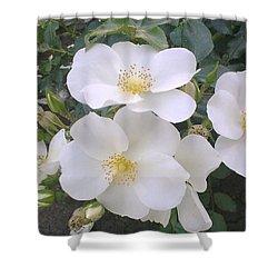 White Roses Bloom Shower Curtain
