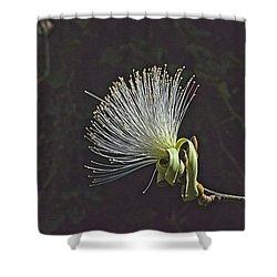 White Shaving Brush Pseudobombax Flower Shower Curtain