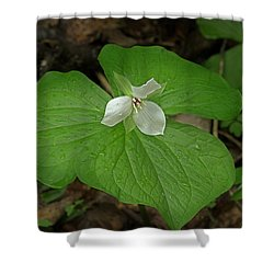 Shower Curtain featuring the photograph White Spring Trillium by Mike Eingle