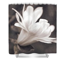 Shower Curtain featuring the photograph  White Star Magnolia Blossom by Jennie Marie Schell