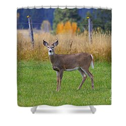 White Tail Dear  Shower Curtain